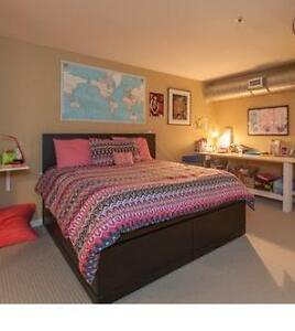 Loft bed from Space Interiors Cambridge Kitchener Area image 2