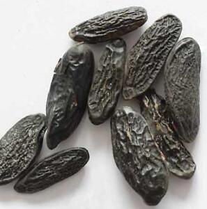 TONKA BEAN HERB 1oz spell magic incense ritual LOVE MONEY WISHES COURAGE WISH