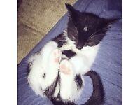 Black&white cat (Oreo)