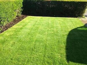 New lawns, Turf Belmont Lake Macquarie Area Preview