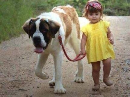 Reliable & affordable dog walker & pet/housesitter Perth NOR