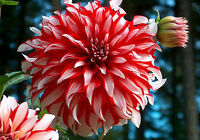 Pre-Order Bulbs/Perennials & Save 20% off all orders