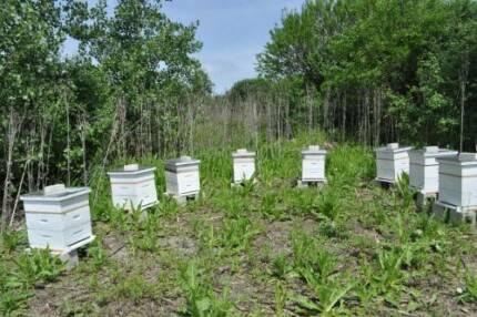 Wanted: Short term Bee Hive lease Sassafras Yarra Ranges Preview