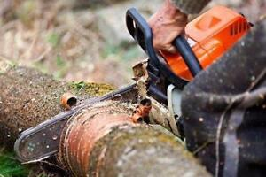 TREE REMOVAL SERVICE - STUMP REMOVAL - BRANCH REMOVAL - TREE CUTTING SERVICE - CALL TODAY FOR A FREE ESTIMATE