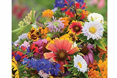 Home Garden Wildflower Seed Mix BEST for Fall & Spring Growing - Covers 5 sq