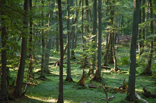 Dschungelgelöt