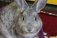 "Young Male Rabbit - Bunny Rabbit: ""Rocket Pop"""