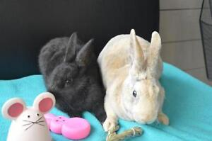 "Baby Male Rabbit - Bunny Rabbit: ""Baxter & Phantom"""
