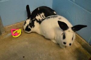 """Adult Male Rabbit - English Spot: """"Galaxy and Rorschach"""""""