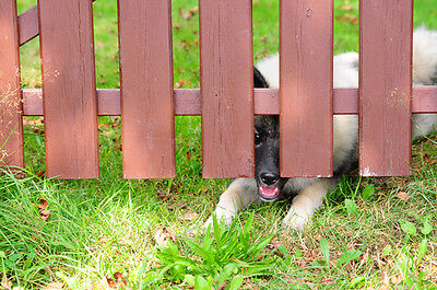 7 Ways To Keep Your Dog From Escaping The Yard Ebay