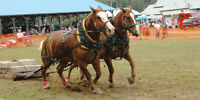 Emsdale Agricultural Societys fair Day heavy horse Pull AUG 27