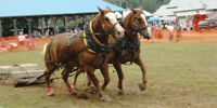 HORSE PULL AT THE EMSDALE FAIR