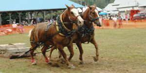 Heavy Horse Pull Aug 24th Emsdale Fair  9 am registration 10 am