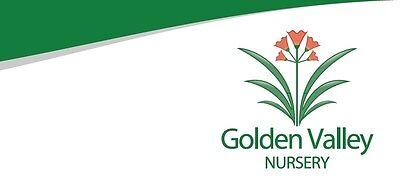 Golden Valley Nursery