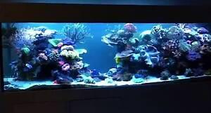 Marine aquarium fish tank 4x2x2 Armadale Armadale Area Preview