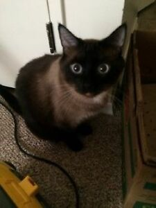 Two cats rehoming (FREE)