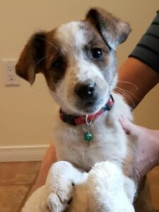 Puppy for Sale -  all the puppies found their forever homes