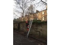 Low level tree pruning & Garden Maintenance