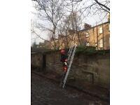 Low level tree pruning & Garden Maintenance/power washing