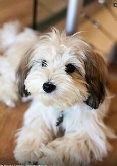 Dog minding Bentleigh East Glen Eira Area Preview
