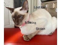 Still missing Siamese cat