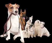 Dog walking services in stony plain and spruce grove