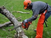 Tree Removal, Storm cleanup, and Brush Cutting services