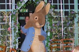 WANTED, ADULT SIZE PETER RABBIT FANCY DRESS COSTUME