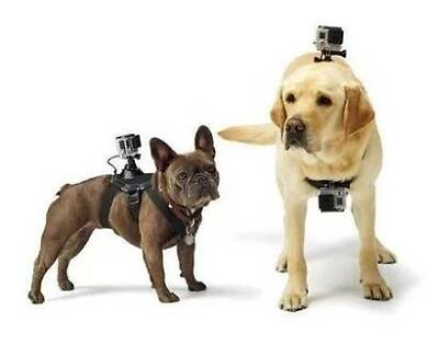 Dog Harness Chest Fetch Strap Belt Mount For GoPro Hero 4 3+ 3 2 Haymarket Inner Sydney Preview