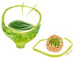 green tea-TOKYO