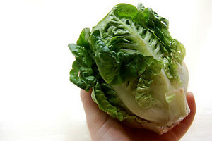 Lettuce LITTLE GEM 150 Seeds (HEIRLOOM / ORGANIC) Vegetables