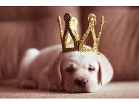 Going Away Soon? Need a Pet Sitter - Reliable with References and CRB