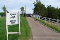 Board/Housing Accomodations for Strathgartney PEI Horse Trials