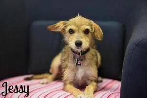 "Young Female Dog - Terrier: ""Jessy"""