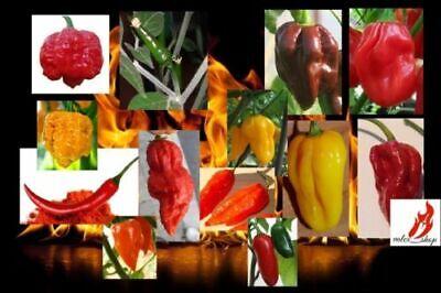 Mix 100 semi isolati di peperoncino piccante,habanero,scorpion+guida+omaggio