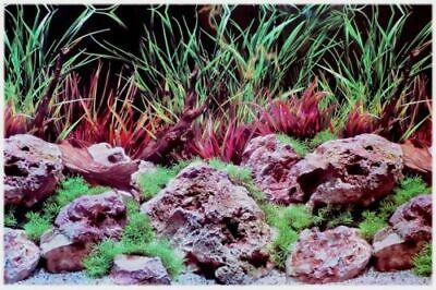 Rückwandfolie 160 cm x 45 cm (EUR 24,99 / m²) Aquarien Rückwand Hintergrund