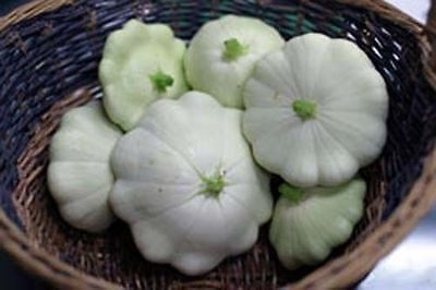 Squash Summer Early White Bush Scallop (Cucurbita Pepo) Heirloom - 25 Seeds Early White Bush Scallop