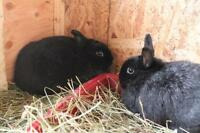 """Young Male Rabbit - Bunny Rabbit: """"Frosty and Cheif"""""""