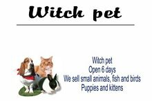 Witch pet pets and supplies Salisbury East Salisbury Area Preview