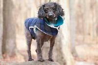 "Adult Female Dog - Poodle: ""Adorable"""