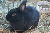"Young Female Rabbit - Bunny Rabbit: ""Kadabra"""