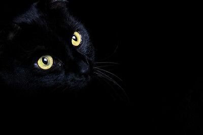 The Black Cat Antiques