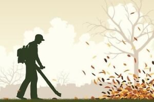 Leaf removal at reasonable prices !!!
