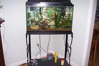Aquarium, 20 Gallon including stand ($155)