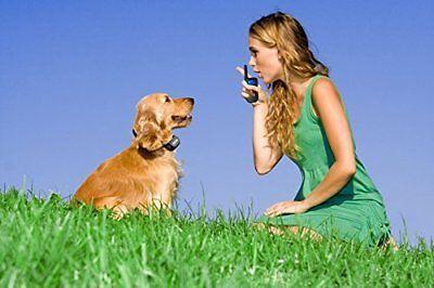 Купить eXuby® EXB-DCH - Shock Collar for Small Dogs w/Remote + FREE TrainingClicker- 3 Mode Dog Training