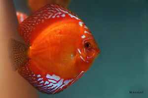 HUGE NEW SHIPMENT OF TROPICAL FISH & LIVE PLANTS