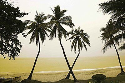 Hainan Island   Tropical Beach Poster 24X36 China Ocean Scenic Palm Trees 4887
