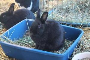 "Young Male Rabbit - Bunny Rabbit: ""Sonny"""