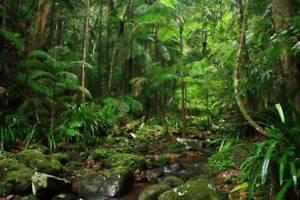 Rainforest Creek, Waterfall, Mountain Views - Seeking Co-Buyers Main Arm Byron Area Preview