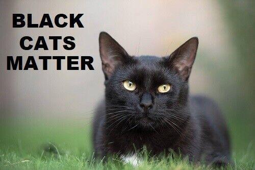 629 - Black Cats Lives Matter Refrigerator Magnet